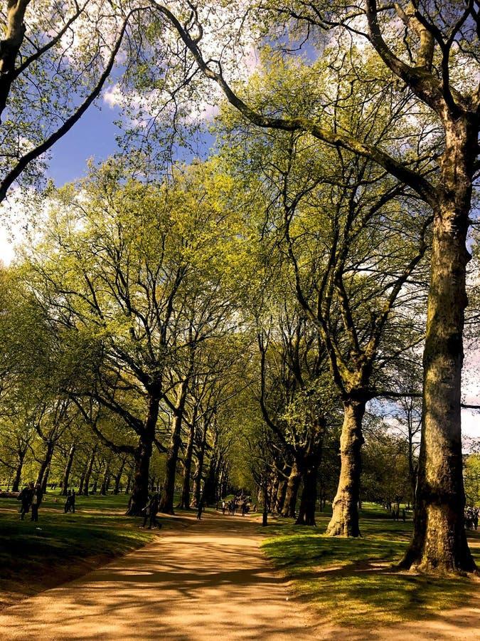 Caminata en el parque fotografía de archivo