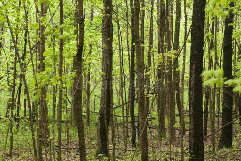 Caminata a través de las maderas foto de archivo