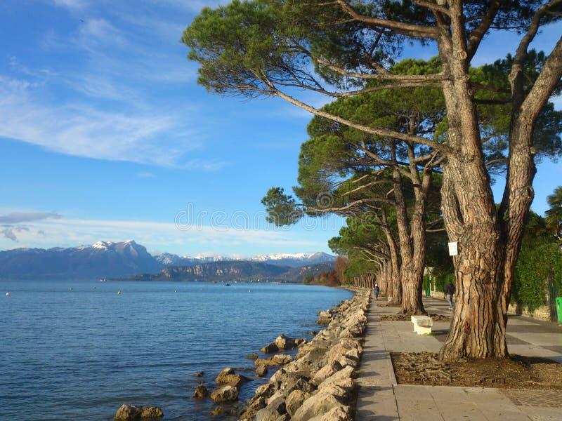 Camine a través de los árboles de pino en la orilla del lago imagenes de archivo