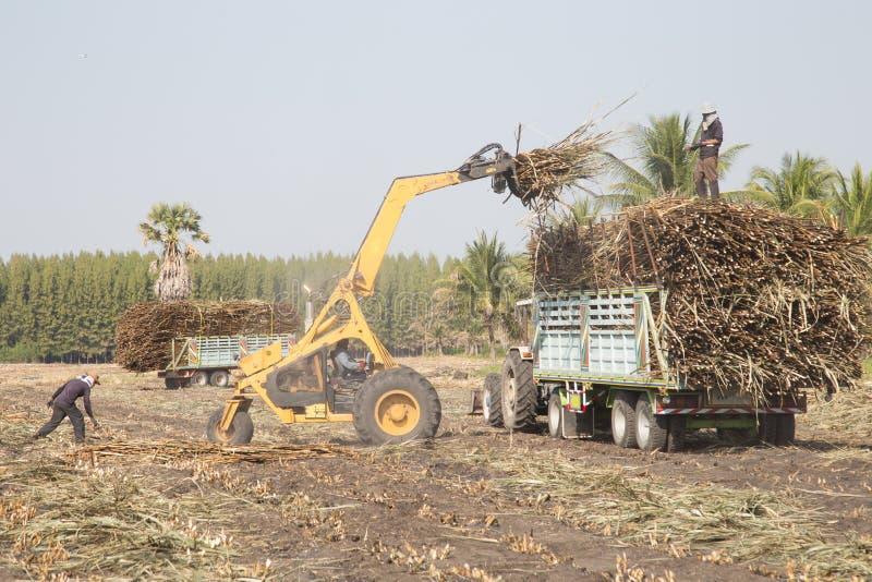 Caminhão da cana-de-açúcar fotos de stock