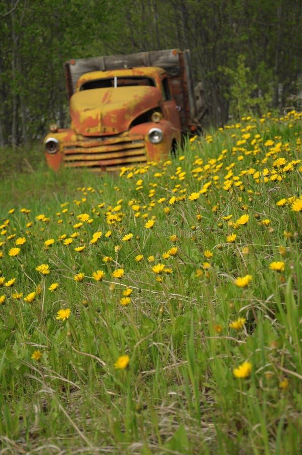 Caminhão velho no campo dos dentes-de-leão foto de stock