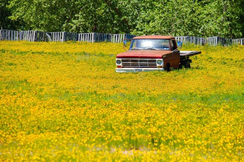 Caminhão velho no tapete Texas Austin das flores imagem de stock