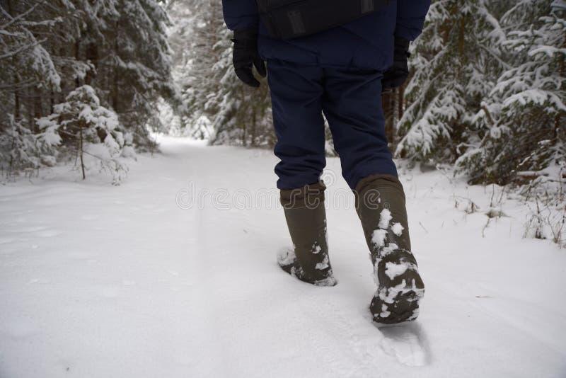 Caminhada através da floresta coberto de neve foto de stock royalty free