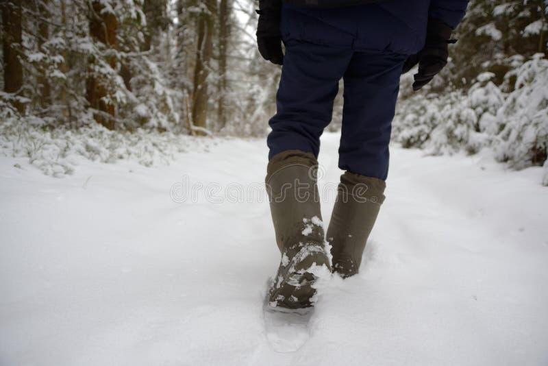 Caminhada através da floresta coberto de neve imagens de stock royalty free