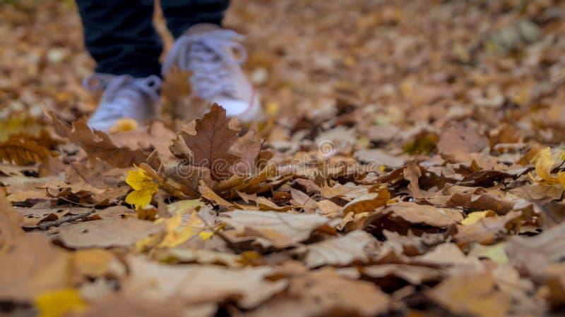 Caminhada através das folhas caídas imagens de stock royalty free