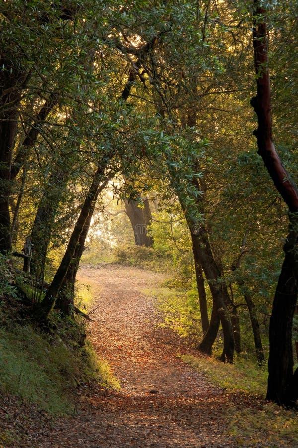Caminhada através das madeiras imagem de stock