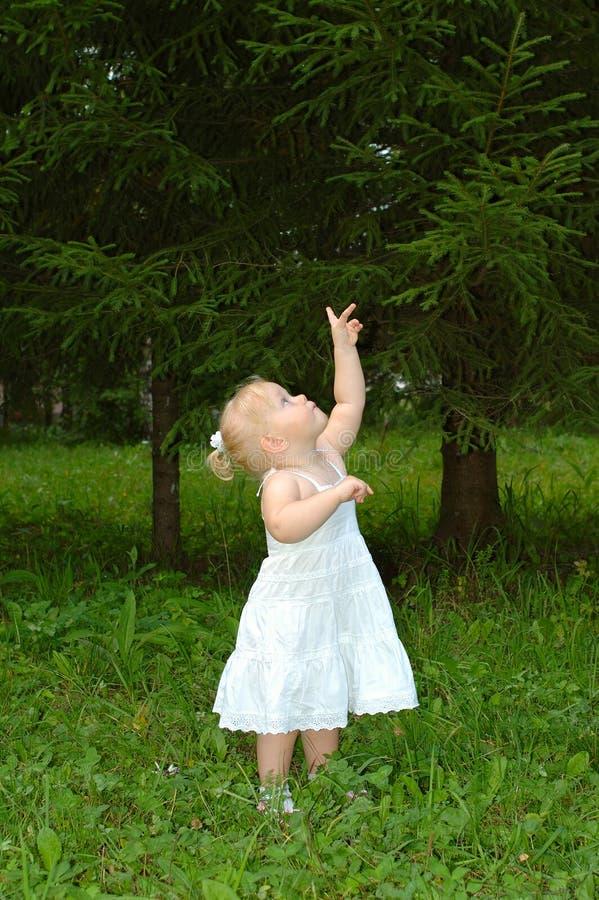 Caminhada bonita da menina na floresta conífera. imagens de stock