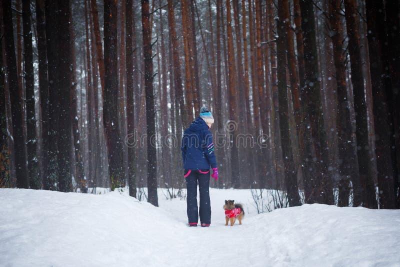 Caminhada com o cão através da floresta do inverno fotos de stock