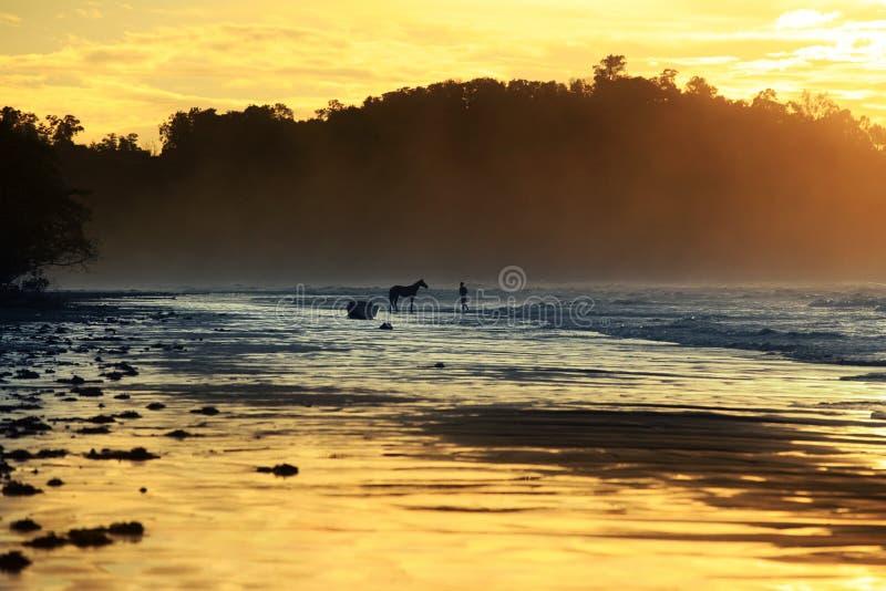 Caminhada com um cavalo imagens de stock royalty free