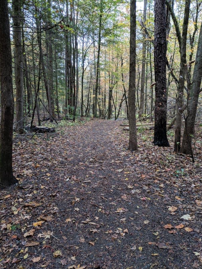 Caminhada da aventura que explora Tennessee Love Fresh Air fotografia de stock