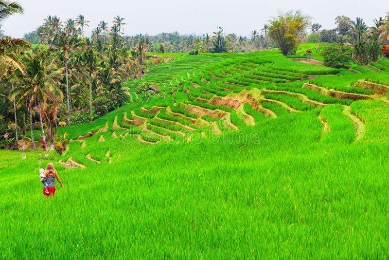 Caminhada da família em campos terraced do arroz verde fotografia de stock royalty free