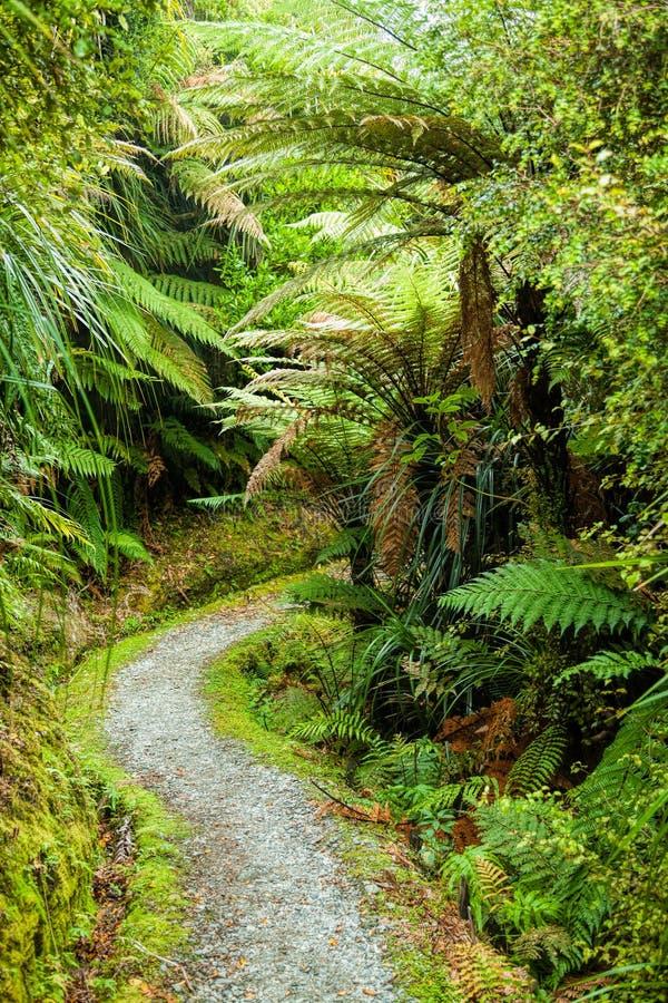 Caminhada da floresta tropical em Nova Zelândia imagem de stock royalty free