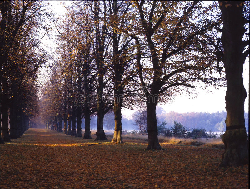 Caminhada da limeira. Parque de Clumber. Inglaterra fotografia de stock