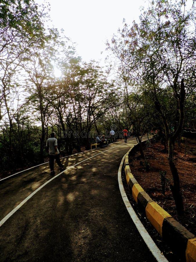 Caminhada da manhã com natureza fotos de stock