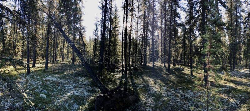 Caminhada da manhã na floresta imagem de stock