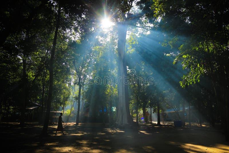 Caminhada da monge no templo da floresta na cor imagem de stock