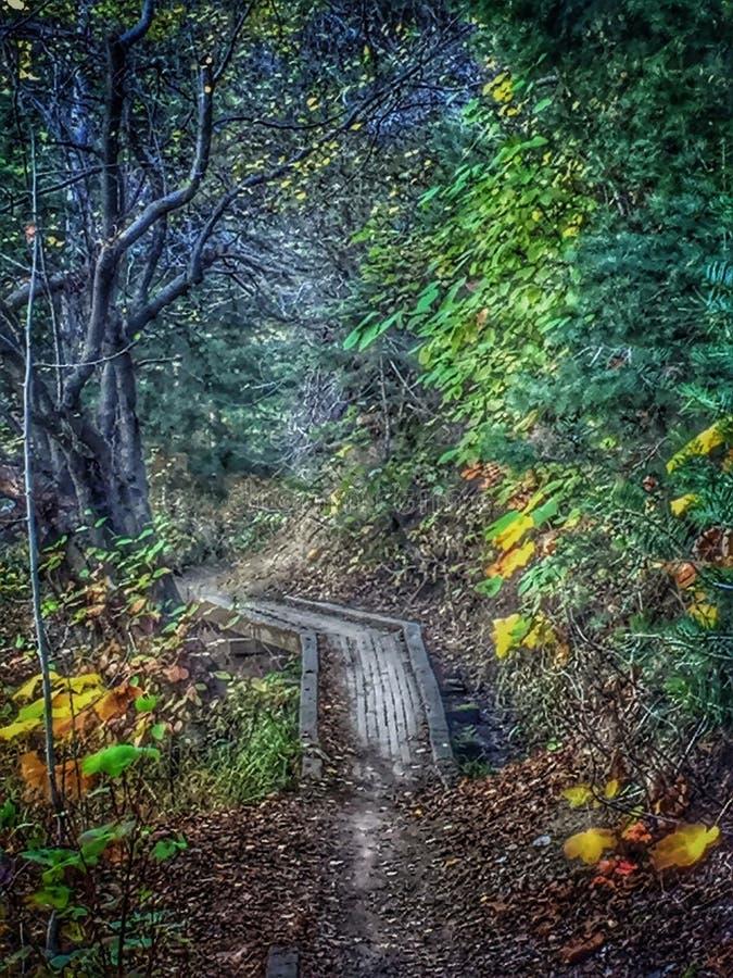 Caminhada da natureza fotografia de stock royalty free