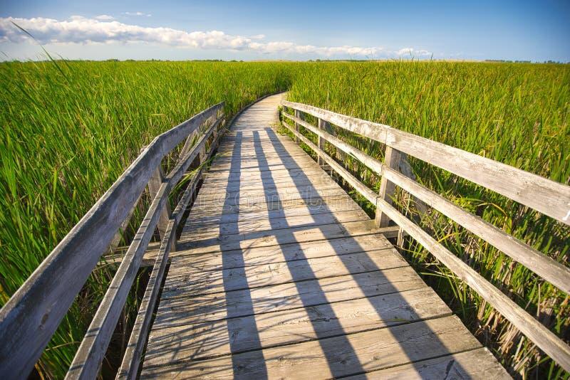 A caminhada da placa de madeira na área da conservação de Pelee do ponto, Ontário, pode imagem de stock