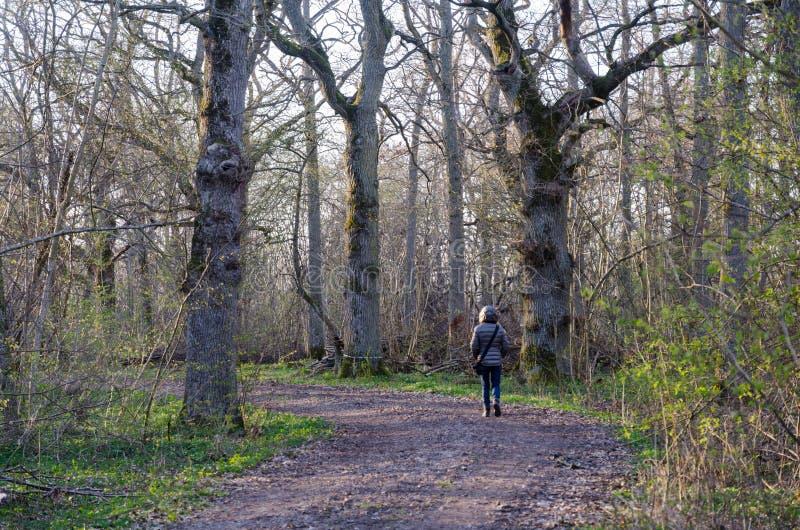 Caminhada da primavera em uma floresta decíduo velha fotos de stock royalty free