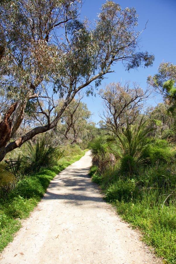 Caminhada de Bushland imagem de stock
