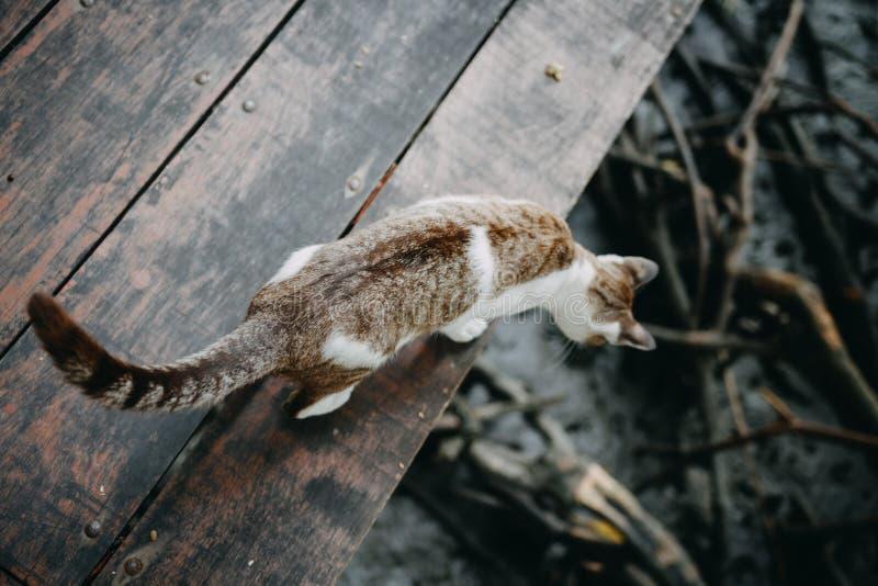 Caminhada de gato de Brown no assoalho de madeira imagens de stock royalty free