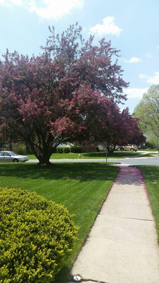 Caminhada diária da manhã e apreciação das árvores fotos de stock royalty free