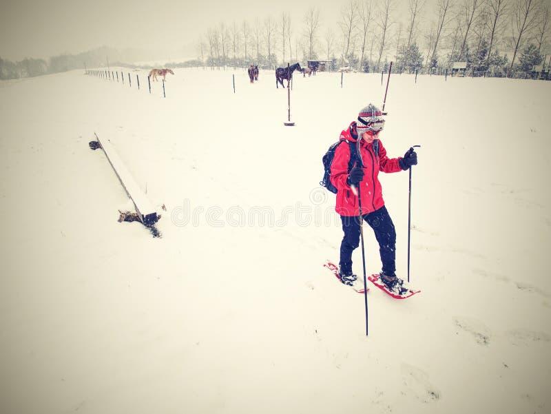 Caminhada do caminhante dos sapatos de neve na explora??o agr?cola do cavalo Esta??o do inverno fotografia de stock