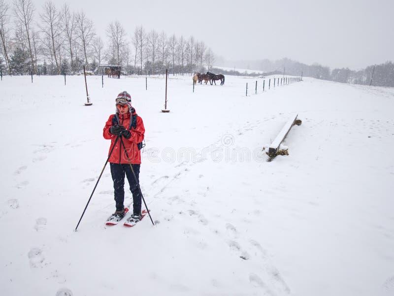 Caminhada do caminhante dos sapatos de neve na explora??o agr?cola do cavalo Esta??o do inverno fotos de stock