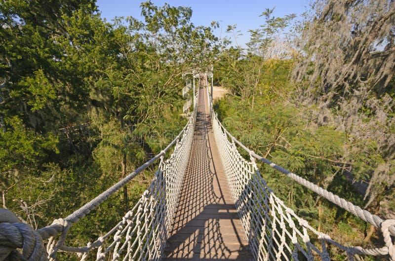 Caminhada do dossel em uma floresta subtropical imagem de stock