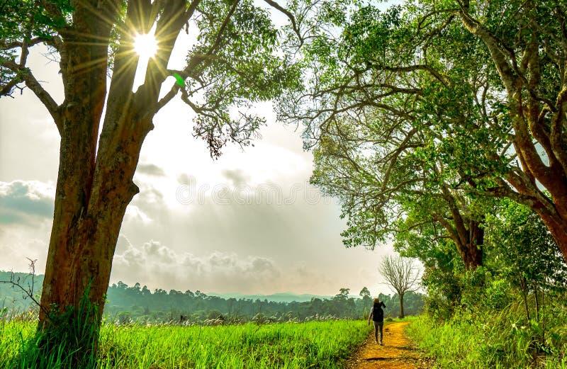 Caminhada do fotógrafo da mulher na estrada secundária entre o campo de grama verde e árvore na noite quando por do sol Paisagem  imagem de stock royalty free