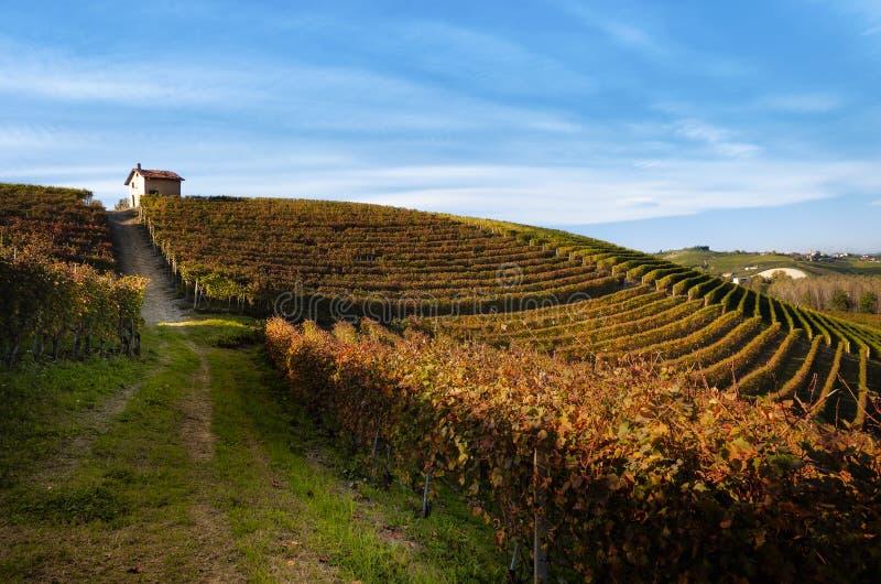 Caminhada do outono após a colheita nos trajetos de caminhada entre as fileiras e os vinhedos da uva do nebbiolo, nos montes de B imagens de stock