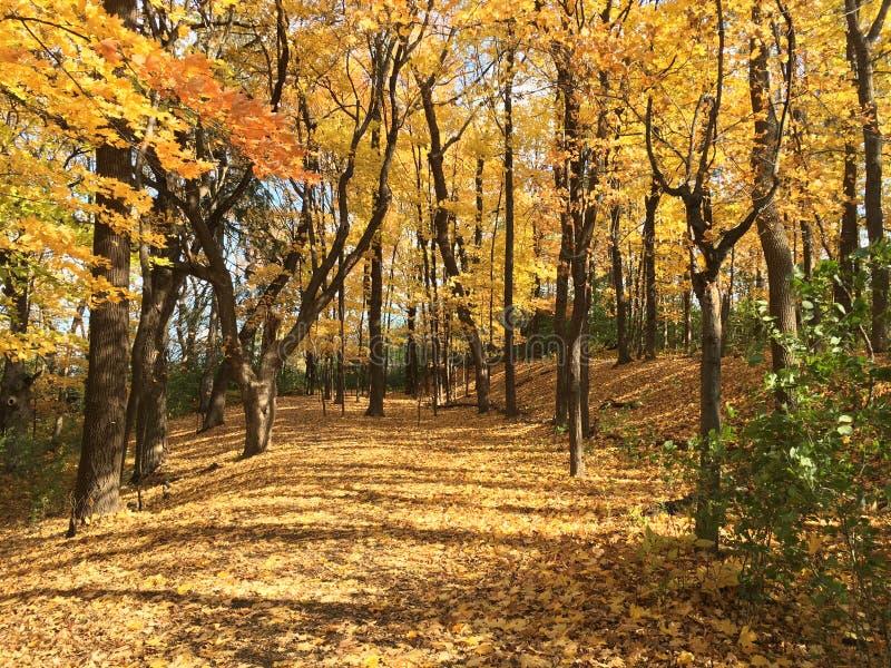 Caminhada do outono nas madeiras fotografia de stock