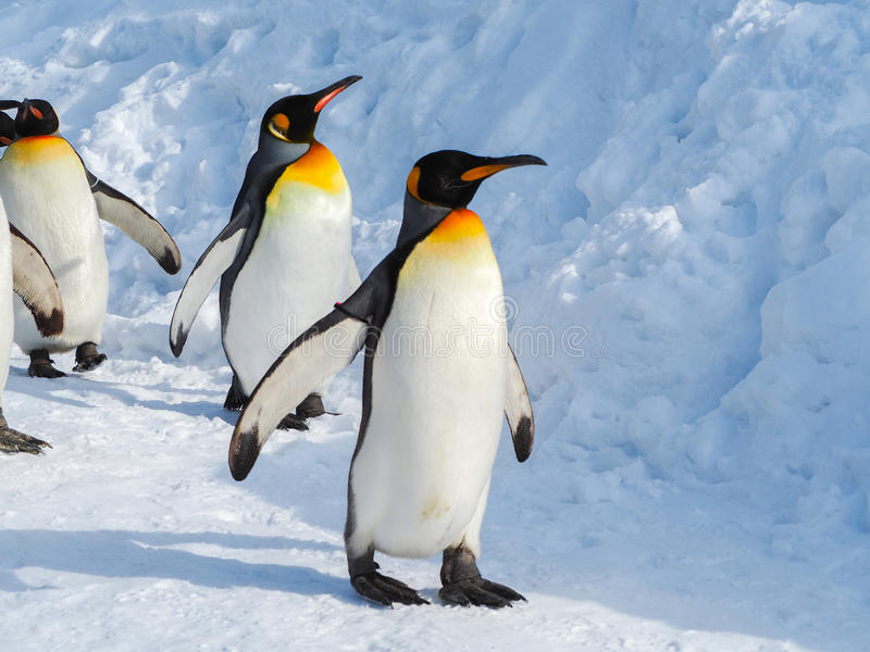 Caminhada do pinguim na neve foto de stock royalty free