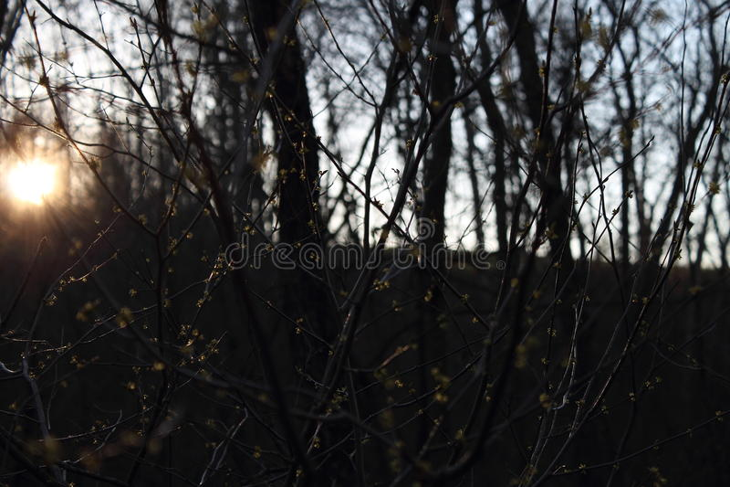 Caminhada do por do sol nas madeiras imagem de stock royalty free