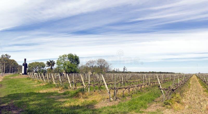 A caminhada do vinho, Uruguai fotografia de stock