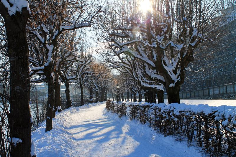 Caminhada dos invernos fotografia de stock royalty free