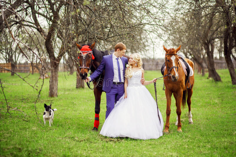 Caminhada dos noivos do casamento com o jardim dos cavalos na primavera fotos de stock