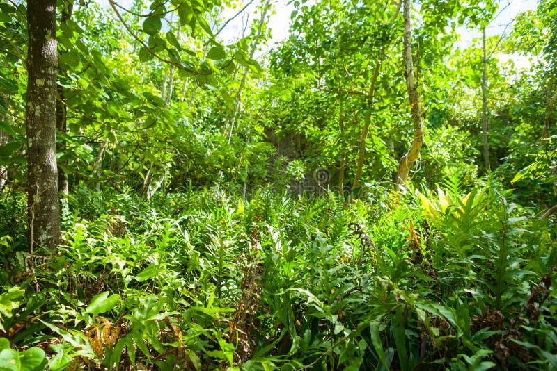 Caminhada impressionante do arbusto a Matapa maravilhoso Chasn um curso popular de fotos de stock