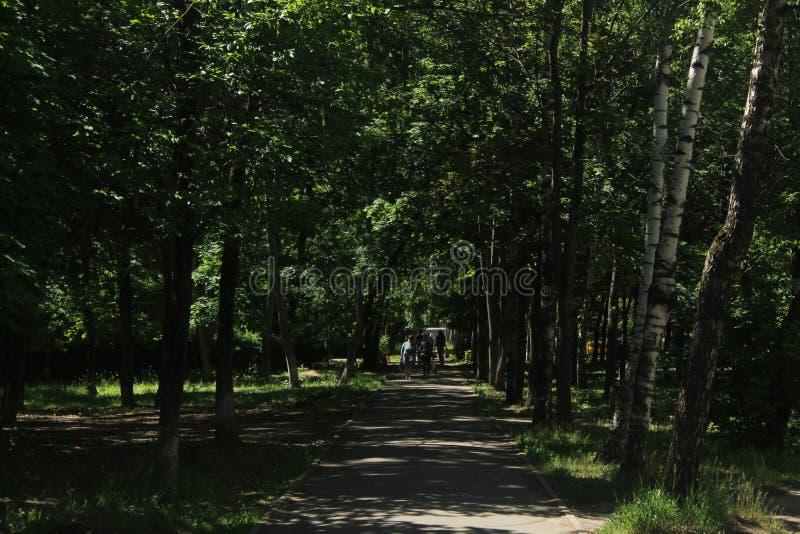 Caminhada a Korolev Aleia de Kooperativnaja imagem de stock