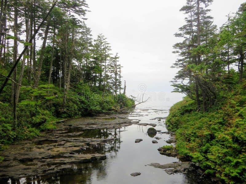 Caminhada louca ao longo das costas e da floresta enevoadas bonitas de Vancou fotos de stock royalty free