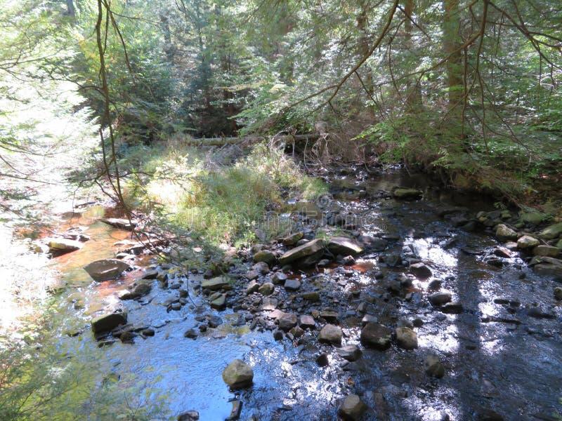 Caminhada na floresta fotos de stock