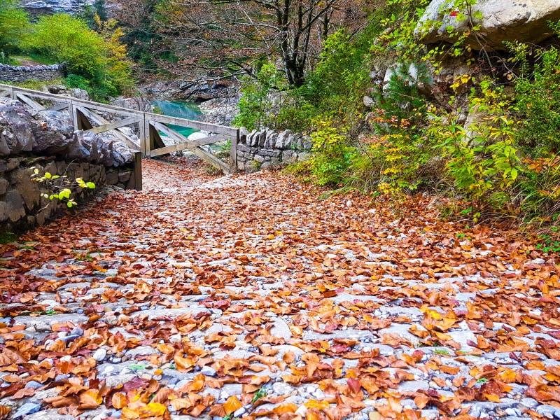 Caminhada na floresta da estrada do outono em Ordesa y Monte Perdido National Park, Huesca spain fotos de stock