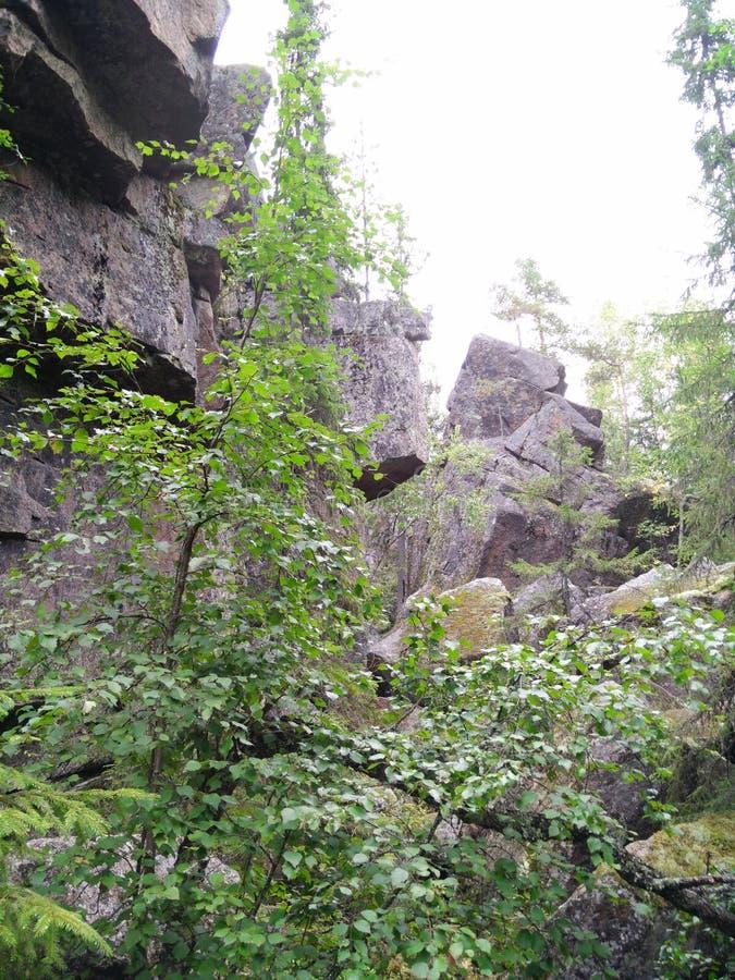 Caminhada na floresta no meio de Finlandia imagem de stock