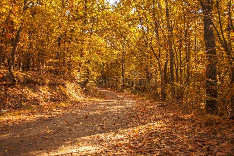Caminhada nas madeiras fotografia de stock