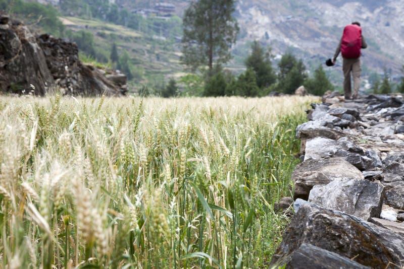 Caminhada nas terras fotografia de stock royalty free