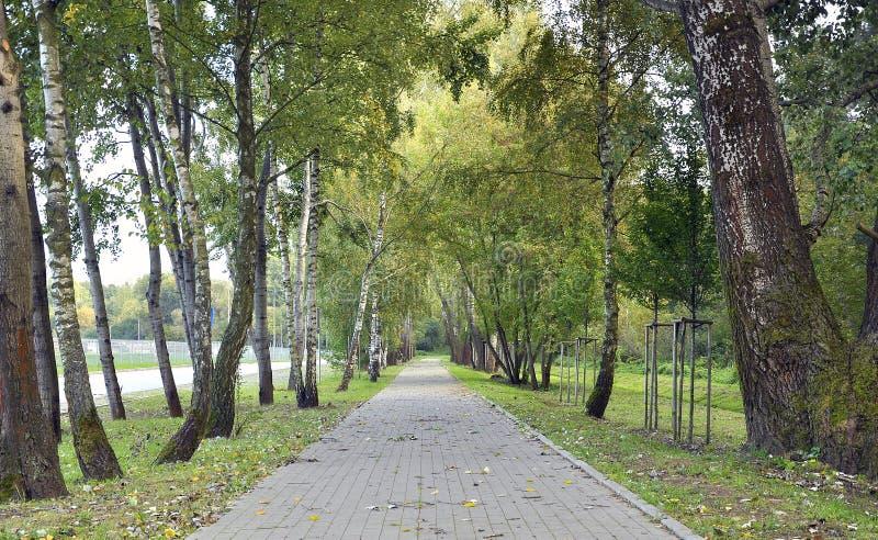 Caminhada no parque da mola fotografia de stock