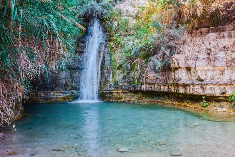 Caminhada no parque nacional Ein Gedi, Israel fotografia de stock royalty free