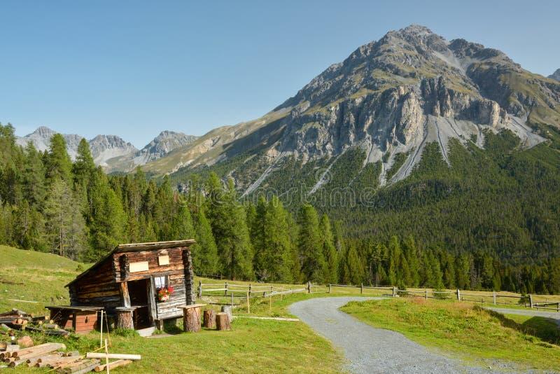 Caminhada no parque nacional suíço perto de Zernez em Suíça foto de stock