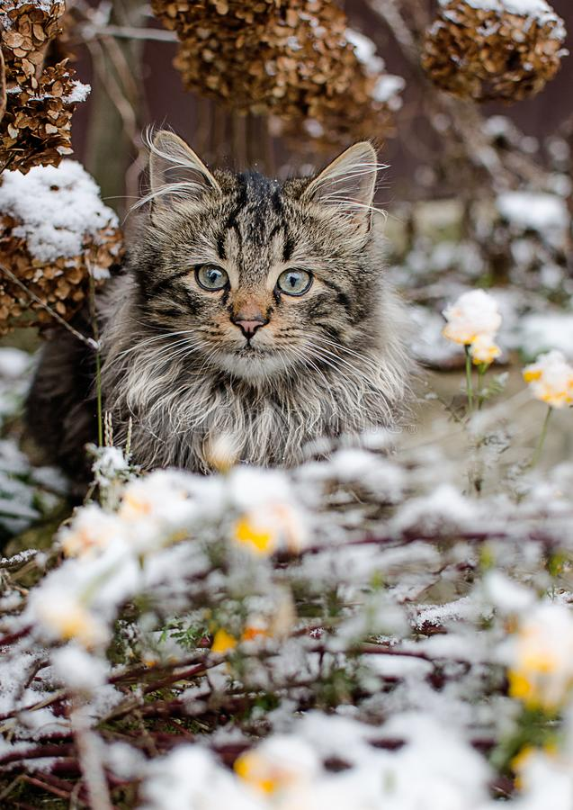 Caminhadas de gato pequenas no ar fresco e na neve fotos de stock