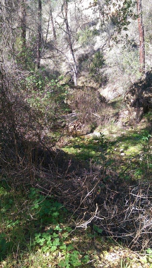 Caminhando Diamond Mines preto foto de stock royalty free